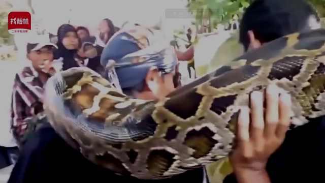 地球上最大的蛇到底有多大?
