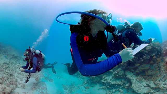 惬意!跟潜水员一起潜入大海看珊瑚
