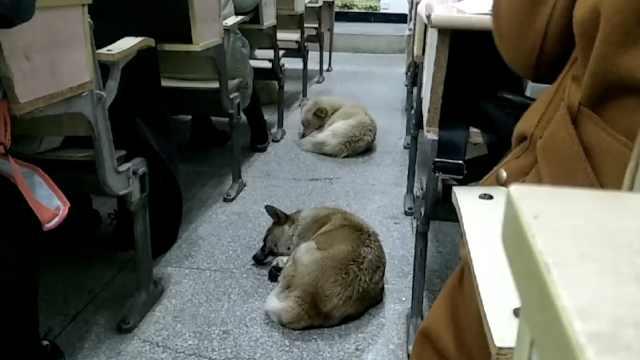 流浪狗教室避雨睡着,学生温柔以待
