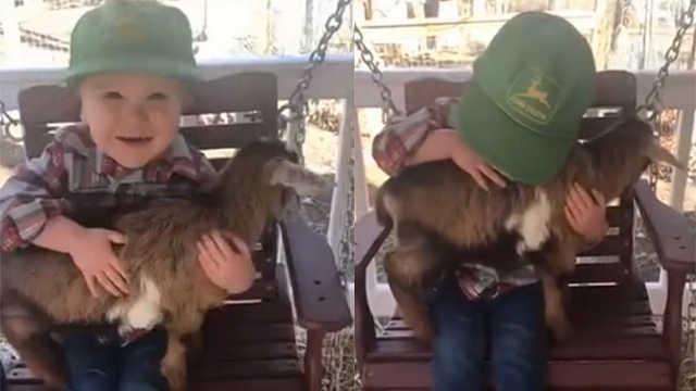 萌娃初见小山羊,自称其母欲抚养