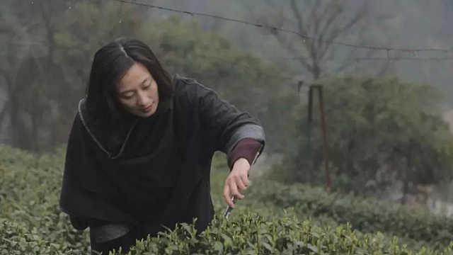 哪款龙井茶最值得买?