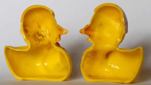 当心你的橡皮鸭:布满细菌危及生命