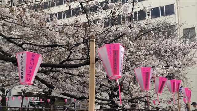 东京经典赏樱地,每年这里都人挤人