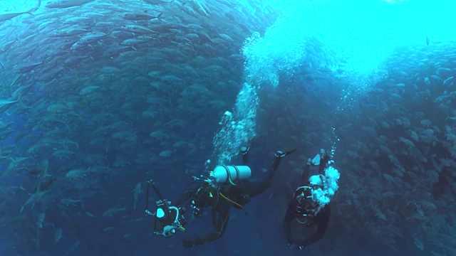 深海潜水穿越鱼群,什么样的体验?