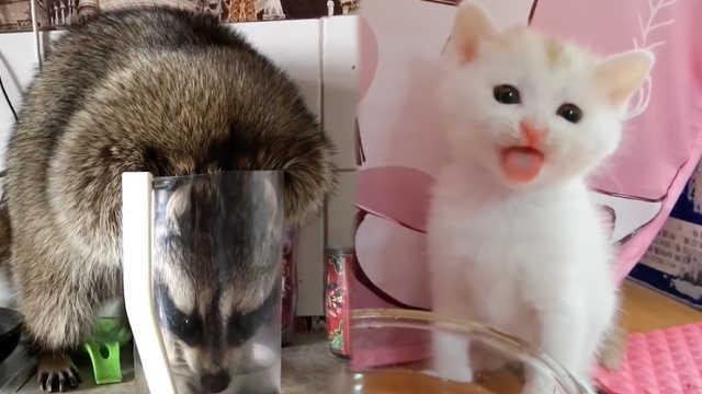 天然呆!小动物们花式喝水太喜感