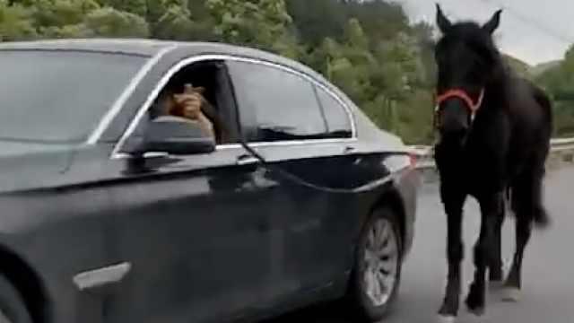 醉了!司机开宝马车遛马,交警介入
