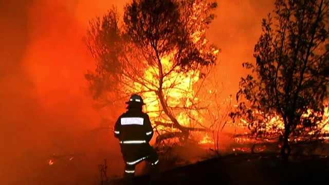 悉尼突发森林大火,澳总理:濒临失控