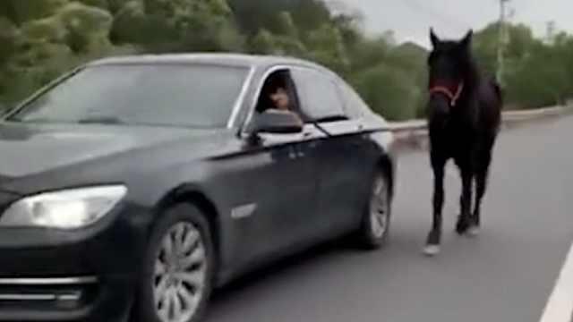 马儿叛逆?#36745;?#22352;车,宝马男遛马被罚