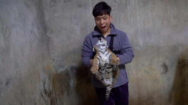 最牛铲屎官!上班撸大猫,下班撸小猫