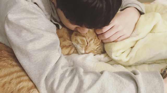 小橘猫与小哥哥的日常:甜蜜到齁
