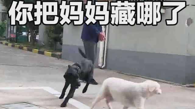 主人假装遗弃狗狗试探狗狗反应