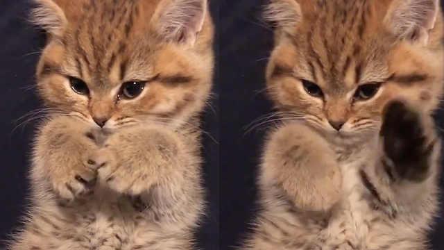 萌化!猫咪教你如何扫光负面情绪