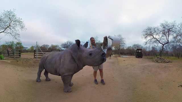 非洲犀牛濒临灭绝,每天3头遭偷猎