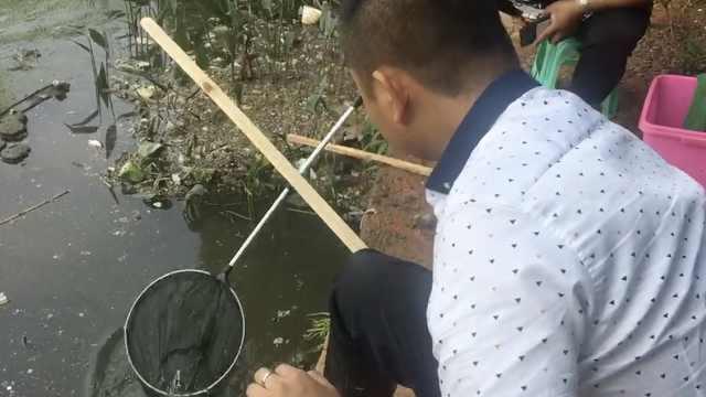 公园小龙虾泛滥,吃货半天钓半桶
