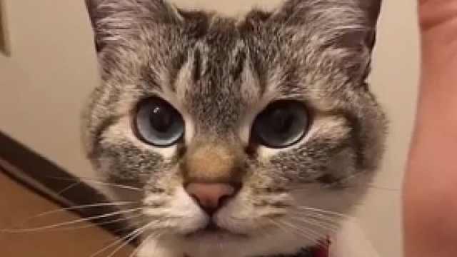喜欢击掌的小猫咪