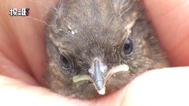 小哥成功孵化出一只小鸟,生命可贵