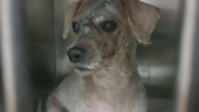 小狗头长肿瘤被弃,好心人垫资救治