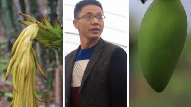 他弃医从农种水果,给火龙果喝豆浆