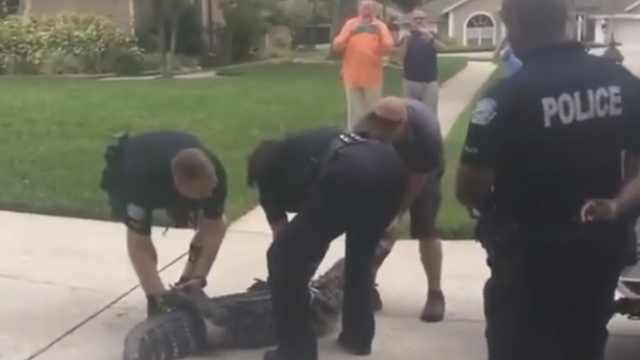 惊险!鳄鱼用头袭击警察,将其击倒