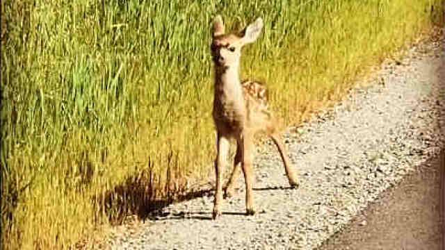 一只鹿宝宝很好奇地溜达出来,好萌