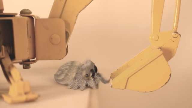 小蜘蛛卢卡斯想打盹,奶声奶气找窝