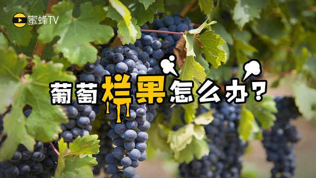葡萄烂果怎么办?