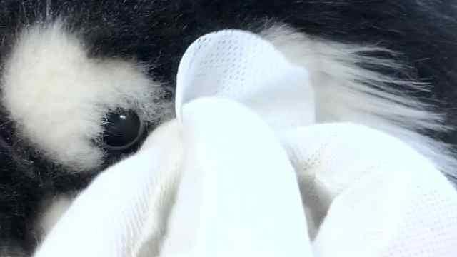 宠物眼用湿巾了解一下