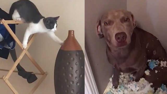 宠物破坏力有多大?它们自己都害怕