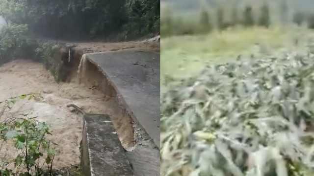 洪水突袭冲毁玉米地,农民雨中大哭