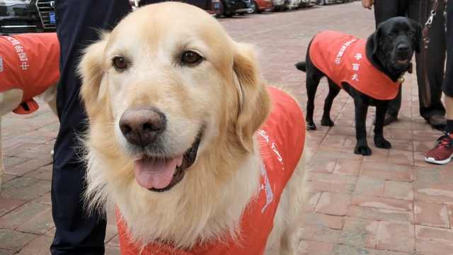 你是我的眼!8只导盲犬伴主人旅行