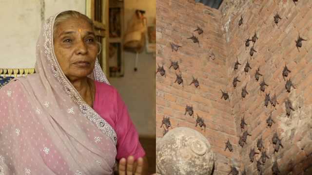 密恐!印度奶奶与2000蝙蝠同住