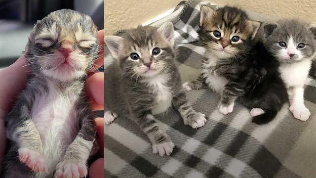 她救活冻僵的小猫,为它们找到了家