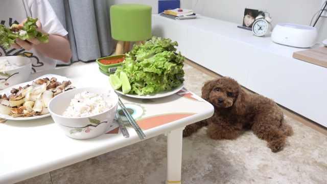 主人吃饭,狗狗在旁边眼巴巴地看着