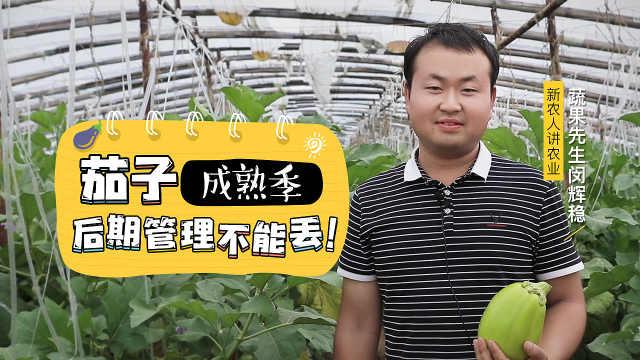 要想茄子产量高,后期管理不能丢!