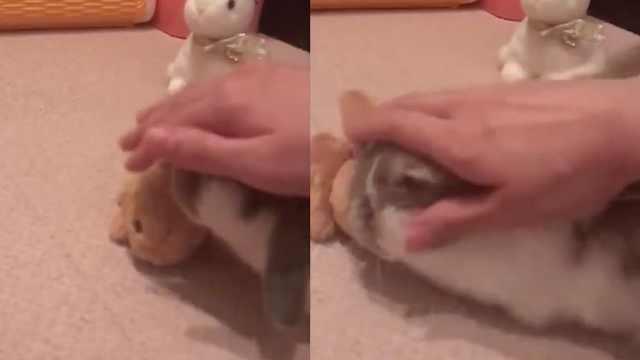 吃醋的兔兔求抚摸,只需宠我一个!
