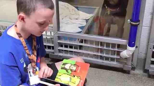 孩子们给流浪狗读书,帮它们被收养