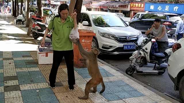 大胆泼猴!它坐守水果店门,打劫路人