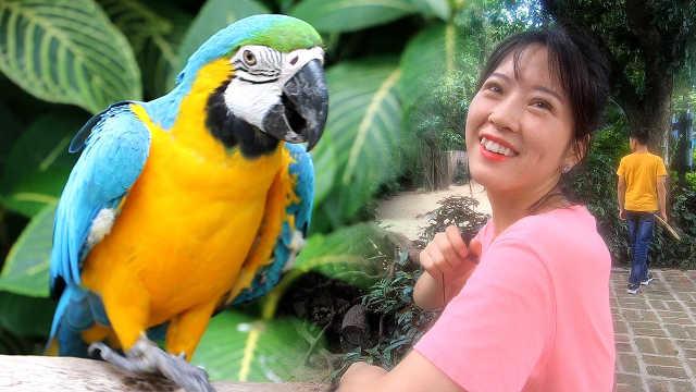 广州长隆的鹦鹉一分钟嗑120颗瓜子