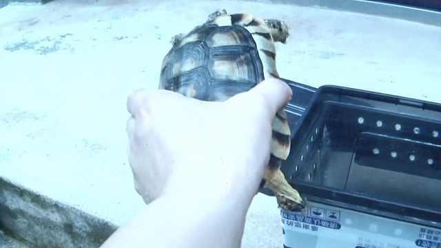 养龟爱好者入歧途,边谈心得边贩卖