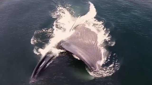 你知道自然界中动物的大小排名吗?