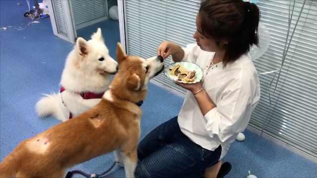 她是宠物烘培师:自己常常吃泡面
