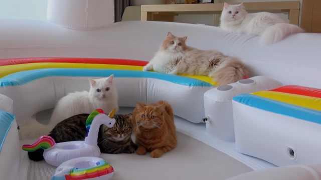 与猫咪一起过暑假,为他们做气垫池