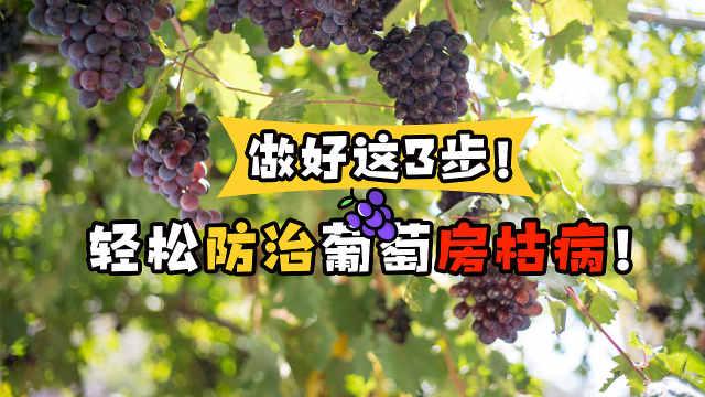 做好这三步,轻松防治葡萄房枯病!