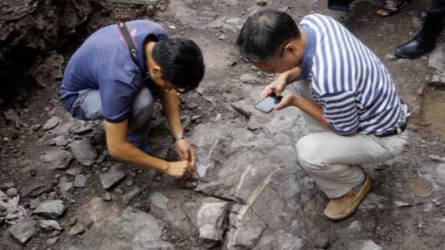惊!村民竟在自家门口挖出恐龙化石