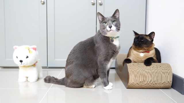 玩具狗进入猫咪群,猫咪会喜欢它吗