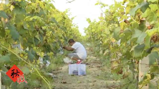 5村民办千亩农场,带动百户人致富