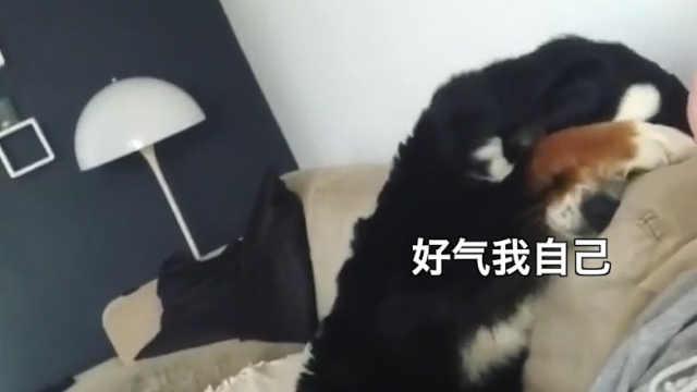 狗狗不小心用爪子划伤主人后