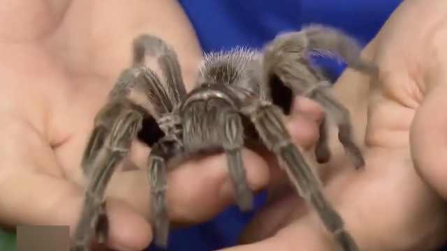 美昆虫馆遭窃,包括世界上最毒蜘蛛