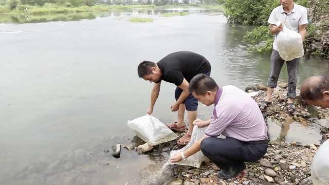 老农电1.5斤鱼,被罚放流4000尾鱼苗