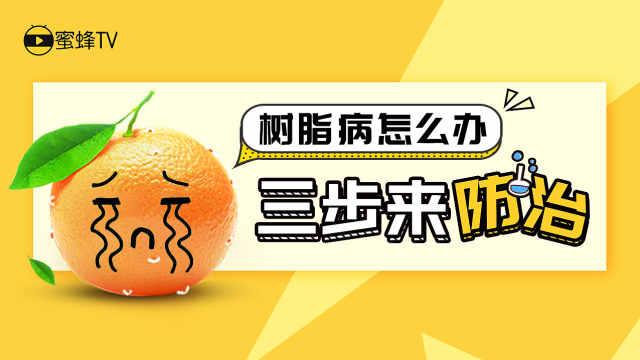 柑橘树脂病怎么办?三步来防治